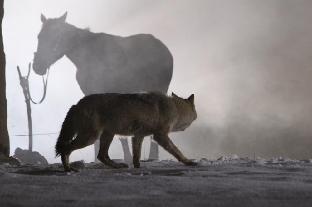 Shal (2012, Kazakhfilm)